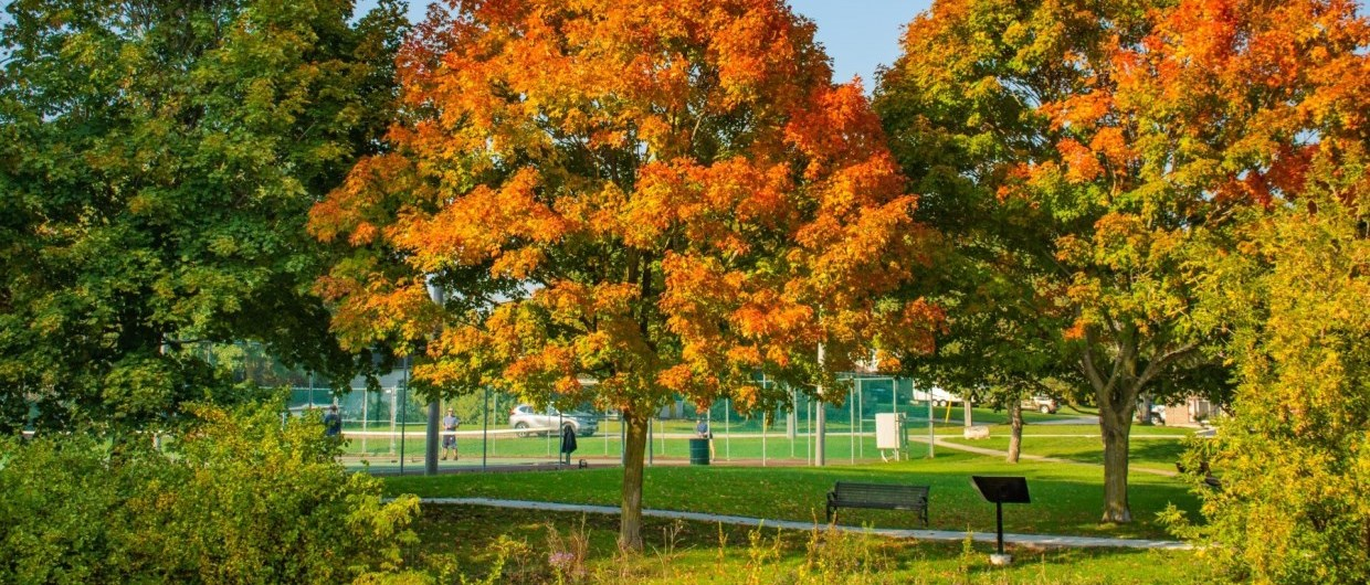 Tennis courts in fall